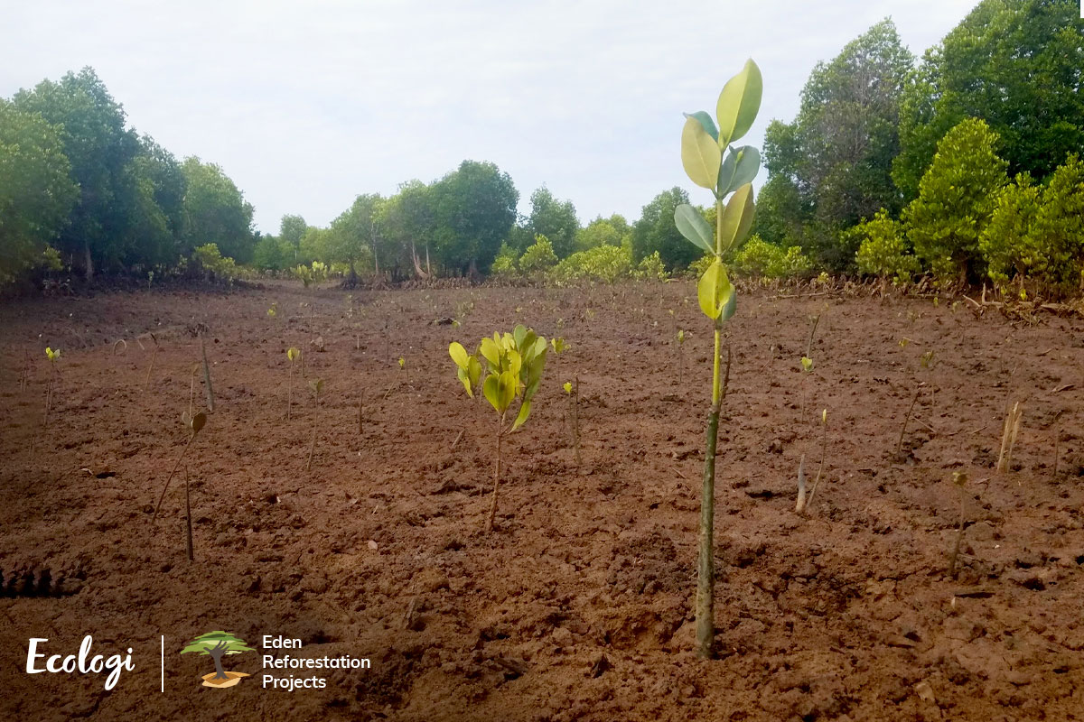 Becoming Climate Positive by Planting Trees
